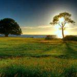 10 7 150x150 - داستان آموزنده جزیره سبز و گاو غمگین