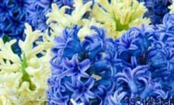 38 4 - روانشناسی گل ها