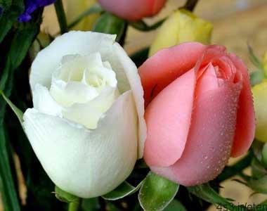 انتخاب گل برای هدیه به قدمت ماقبل تاریخ!