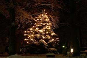 تاریخچه استفاده از درخت کریسمس