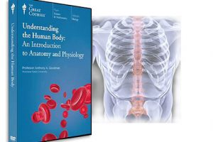 6 46 300x200 - آشنایی با بدن انسان: مقدمه ای بر آناتومی و فیزیولوژی