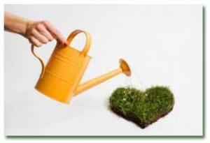 hou243 300x205 - ۴ نکته درباره آبیاری گیاهان آپارتمانی