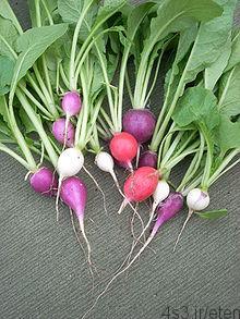 گیاه ترب یا تربچه