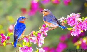 های بهار 300x180 - پیامک های بهار بخش ۱