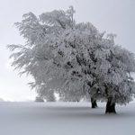 های زمستان 150x150 - پیامک های زمستان بخش ۱