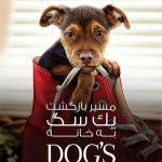 1 14 150x150 - دانلود فیلم A Dogs Way Home 2019 مسیر بازگشت یک سگ به خانه با دوبله فارسی و کیفیت عالی