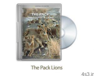 12 11 300x244 - دانلود The Pack Lions 2012 - مستند دسته شیرها