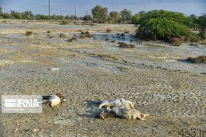 اتلاف احشام در سیلاب بلوچستان (+تصاویر) سایت 4s3.ir