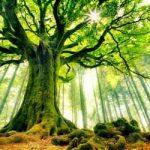 درختانی را از خواب بیرون می آورم (احمدرضا احمدی) سایت 4s3.ir