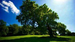 شعر های زیبا در مورد درخت و درختکاری سایت 4s3.ir