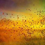 مثل باد سرد پاییز (لیلا کسری) سایت 4s3.ir