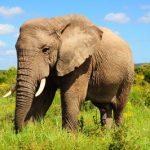 story philosopher1 1 150x150 - داستان ضرب المثل باز فیلش یاد هندوستان کرد
