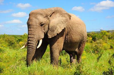 story philosopher1 1 - داستان ضرب المثل باز فیلش یاد هندوستان کرد