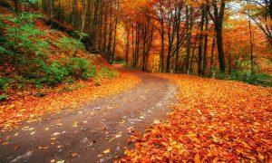 های پاییز 300x180 - پیامک های پاییز