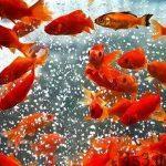 خبرهای پزشکی : امکان انتقال کرونا از طریق ماهی سفره هفت سین سایت 4s3.ir