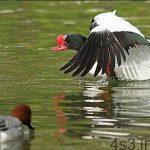 برای دیدن نادرترین پرندگان جهان