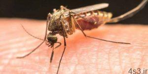 خبرهای پزشکی : تولید واکسن جدید مالاریا با پروتئین ویروس قدیمی سایت 4s3.ir