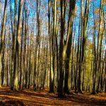 جنگل راش در روستای سنگده سایت 4s3.ir
