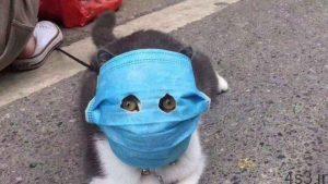 خبرهای پزشکی : حیوانات خانگی عامل انتقال کرونا هستند؟/ ماسک ضد کرونای حیوانات هم به بازار آمد سایت 4s3.ir