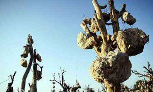 درختانی با جوانههای سنگی +عکس سایت 4s3.ir