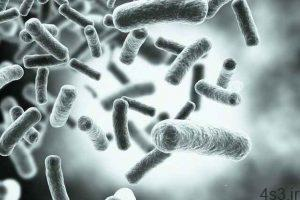 خبرهای پزشکی : ریزحاملهایی که باکتریها را فریب میدهند! سایت 4s3.ir