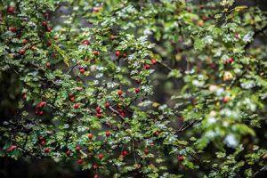 سفری دل انگیز به جنگل رویایی الیمستان سایت 4s3.ir