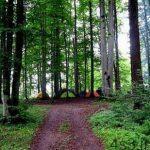 سفری لذت بخش به جنگل و آبگرم لاویج + تصاویر سایت 4s3.ir