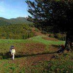 سفر به جنگلی که محل عبور فرشته ها است سایت 4s3.ir