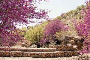 سفر به تنگه زیبای ارغوان سایت 4s3.ir