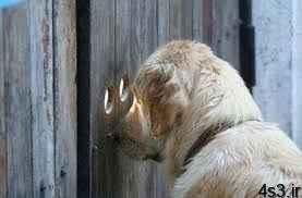 سگ دزد گیر سایت 4s3.ir