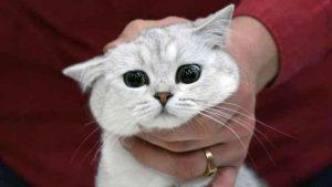 خبرهای پزشکی : نقش گربهها در افزایش خودکشی زنان چیست؟    افزایش خودکشی زنان چیست؟ سایت 4s3.ir