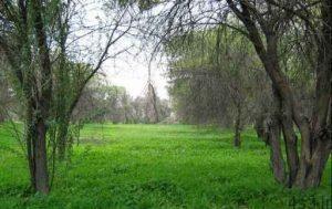 پارک جنگلی چاهکوتاه سایت 4s3.ir
