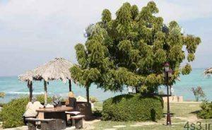 پارک ساحلي مرجان يکي از زيباترين مراکز ديدني کيش سایت 4s3.ir