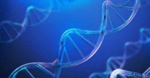 خبرهای پزشکی : کشف پروتئینی جدید برای مقابله با پیری و سرطان سایت 4s3.ir