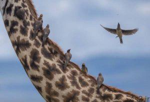 هنری5 300x205 - تصاویر هنری از حیوانات