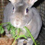 آشنایی با نحوه مراقبت از خرگوش و غذا دادن به خرگوش سایت 4s3.ir