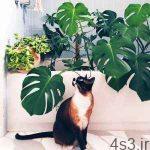آشنایی با گیاهان آپارتمانی سمی برای حیوانات سایت 4s3.ir