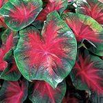 آشنایی با گیاهان سمی و آسیب های آنها سایت 4s3.ir