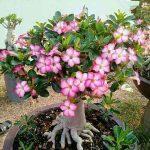 اصولی برای نگهداری گل و گیاهان آپارتمانی سایت 4s3.ir