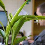 انتخاب یک گیاه مناسب دفتر کار سایت 4s3.ir