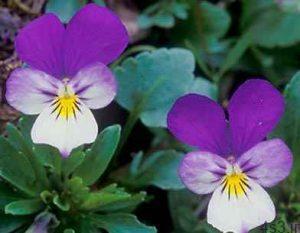 با تعدادی از گلهای پاییزی آشنا شوید + روش نگهداری سایت 4s3.ir