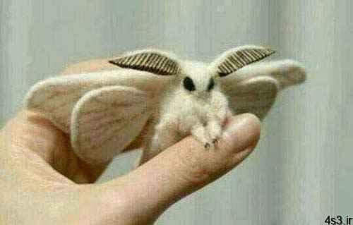 تصاویری از جالب ترین حشرات دنیا سایت 4s3.ir
