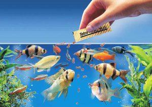 تغذیه ماهی های آکواریومی سایت 4s3.ir