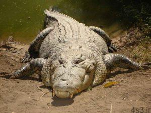 تفاوت کروکدیل و تمساح چیست؟ سایت 4s3.ir