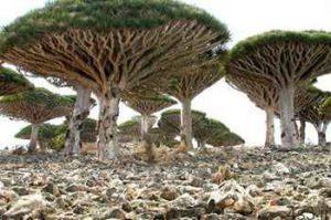 جزیره سوکوترا؛ یکی از عجیب ترین مکان های روی زمین!! (+عکس) سایت 4s3.ir