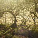 جنگل اسرارآمیز ویستمن در انگلیس + تصاویر سایت 4s3.ir