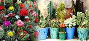 حقایقی خواندنی درباره گیاه کاکتوس سایت 4s3.ir
