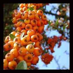 آیا خواص این میوه خوشمزه رامیدانید؟!! سایت 4s3.ir