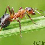 دانستنی هایی شگفت آور درباره مورچه ها سایت 4s3.ir