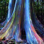 درخت رنگین کمان + تصاویر سایت 4s3.ir
